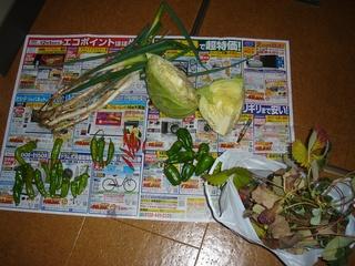収穫したもの(イチゴ(とちおとめ)、ピーマン・甘唐・青唐辛子、ネギ、キャベツ)