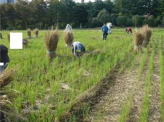 藁を束ねる作業