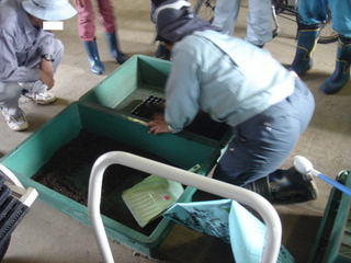 128穴の苗トレーに培土を詰めていく作業
