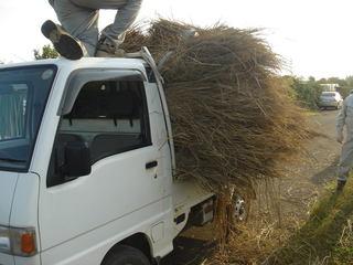 藁の堆肥を納屋に移動