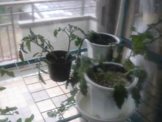 リアルハウス栽培