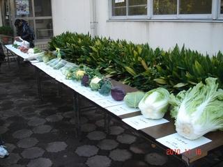 大学で作っている作物です!