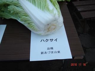 白菜(新あづま山東)