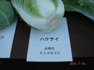 白菜(さとぶき613)