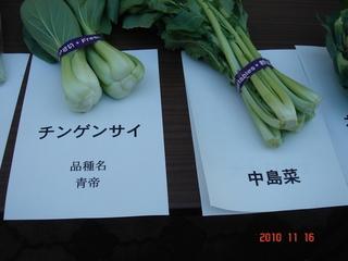 中島菜・チンゲンサイ(青帝)