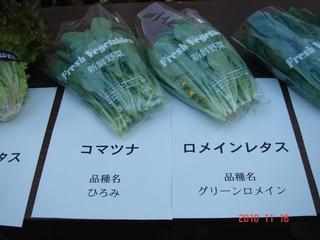 ロメインレタス(グリーンロメイン)、小松菜(ひろみ)
