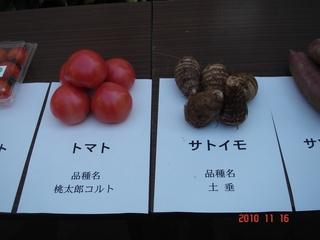サトイモ(土垂)、トマト(桃太郎コルト)