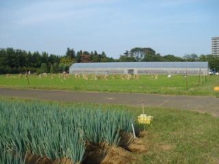 稲作の藁で堆肥づくり